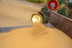 Mucchio di grano & del grano di raccolta Immagini Stock Libere da Diritti