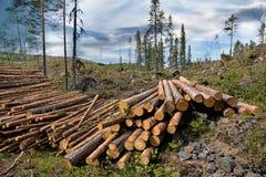 Mucchio di legname Fotografie Stock Libere da Diritti