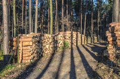 Mucchio di legname Fotografia Stock