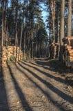 Mucchio di legname Fotografia Stock Libera da Diritti