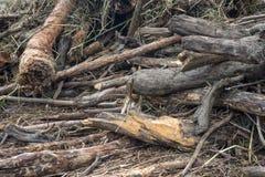Mucchio di legname galleggiante sul parco del fiume Fotografia Stock