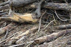 Mucchio di legname galleggiante sul parco del fiume Fotografie Stock Libere da Diritti