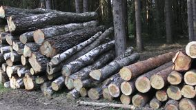 Mucchio di legno archivi video