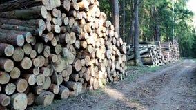 Mucchio di legno video d archivio
