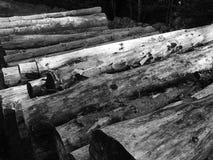 Mucchio di legno Immagine Stock