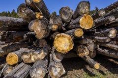 Mucchio di legno invecchiato Immagini Stock