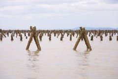 Mucchio di legno nel mare Immagine Stock Libera da Diritti