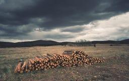 Mucchio di legno sull'orlo della foresta Fotografia Stock