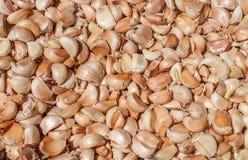 Mucchio di molti chiodi di garofano di aglio freschi nel mercato degli agricoltori da vendere dal campo per fondo Fine in su Immagini Stock Libere da Diritti