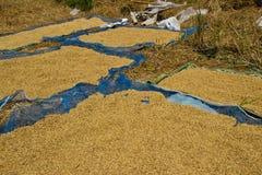 Mucchio di risaia Fotografia Stock Libera da Diritti