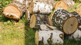 Mucchio di una legna da ardere della betulla Immagini Stock Libere da Diritti