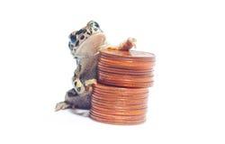 Mucchio di varie monete e della rana pazzesca Immagini Stock