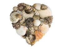 Mucchio Heart-shaped delle coperture e delle lumache di mare Fotografie Stock Libere da Diritti