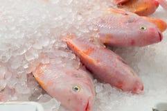Mucchio rosso del pesce di tilapia congelato in ghiaccio sulla vendita in supermercato Fotografie Stock Libere da Diritti