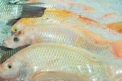 Mucchio rosso del pesce di tilapia congelato in ghiaccio sulla vendita in supermercato Immagine Stock