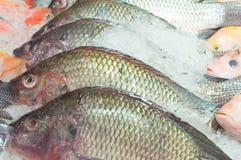 Mucchio rosso del pesce di tilapia congelato in ghiaccio sulla vendita in supermercato Immagini Stock Libere da Diritti