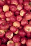 Mucchio Yummy delle mele fotografia stock libera da diritti