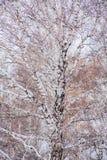 Much Birch winter day Stock Photography
