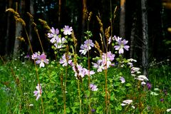 Flowerses. Much different colours decorate steepe and timber landscape Royalty Free Stock Photo