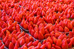 Much ripe strawberries. Large ripe strawberries stacked in aluminum containers Stock Photography