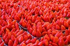 Much ripe strawberries Stock Photography