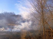 Much smoke in the forest, burning dry grass royalty free stock photography