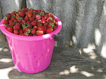 Much strawberry Stock Photo