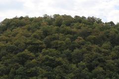 Much trees with green leaves on mountain royalty free stock photos