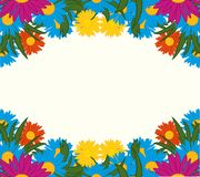 Much varicoloured flowers background. Varicoloured flower on white background is insulated Royalty Free Stock Photos