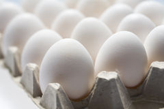 Much white eggs Stock Images
