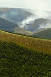 Mucha altitud Forest Deliberately Set To Fire Fotos de archivo