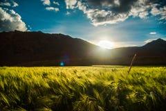 Mucha altitud Pea Farming fotos de archivo libres de regalías