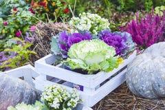 Mucha col y productos b brillante del otoño de la decoración de las flores Fotos de archivo