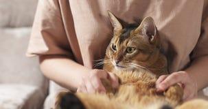 Muchacha adolescente con el gato abisinio triste en las rodillas que se sientan en el sofá Fotografía de archivo libre de regalías