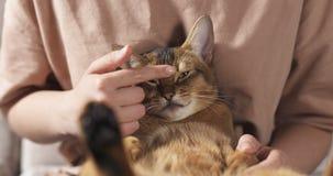 Muchacha adolescente con el gato abisinio triste en las rodillas que se sientan en el sofá Imagenes de archivo