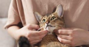 Muchacha adolescente con el gato abisinio triste en las rodillas que se sientan en el sofá Imagen de archivo libre de regalías