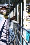 Muchacha adolescente que camina en un puente Imagen de archivo