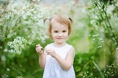 Muchacha adorable del niño en un prado imagen de archivo