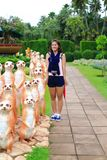 Muchacha asiática linda con la estatua del meetkat Fotografía de archivo libre de regalías