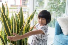 Muchacha asiática que abraza el árbol en florero en casa Fotos de archivo