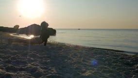 Muchacha atlética en un mono negro y tatuaje en su cadera que hace yoga en la arena cerca del mar o del océano en el contraluz de almacen de metraje de vídeo
