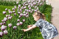 Muchacha bastante pequeña que toca tulipanes crecientes Foto de archivo libre de regalías
