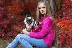 Muchacha bonita con dos perros de la chihuahua en la naturaleza Foto de archivo