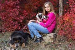 Muchacha bonita con dos perros de la chihuahua en la naturaleza Imagenes de archivo