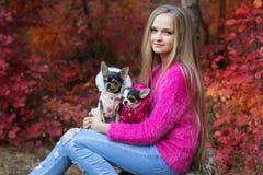 Muchacha bonita con dos perros de la chihuahua en la naturaleza Fotos de archivo