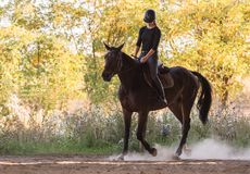 Muchacha bonita joven que monta un caballo con las hojas retroiluminadas detrás Imagen de archivo libre de regalías