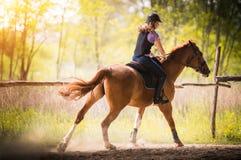 Muchacha bonita joven que monta un caballo con las hojas retroiluminadas detrás en s Foto de archivo