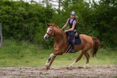 Muchacha bonita joven que monta un caballo con las hojas retroiluminadas detrás en s Imagen de archivo