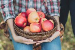 Muchacha con Apple en el manzanar Fotos de archivo libres de regalías