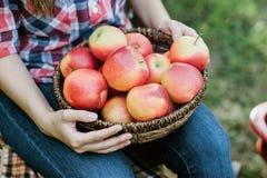 Muchacha con Apple en el manzanar Imagen de archivo